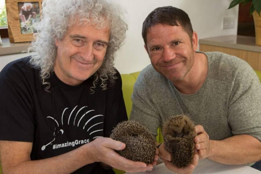 Meet The Hedgehogs: The Series